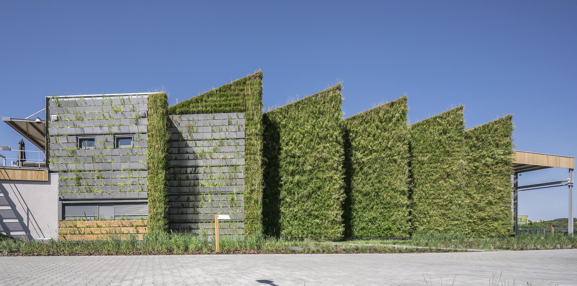 Zelená fasáda v podobně vertikální zahrady