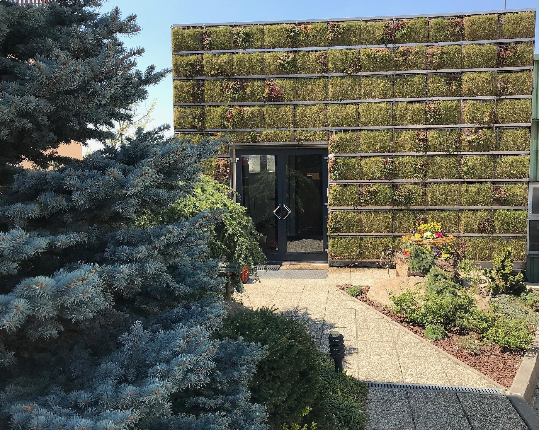 Zelené fasády - oku lahodí, domu pomáhá