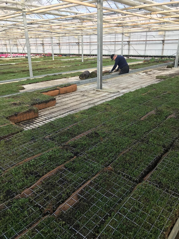 Zahájili jsme předpěstování zelených fasád