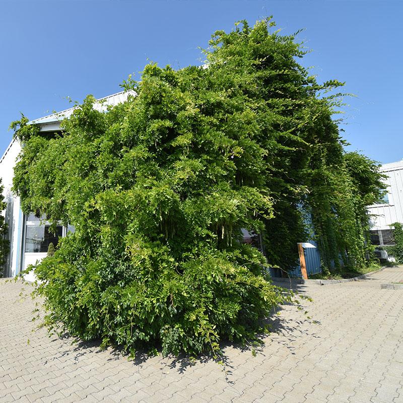 Zelené fasády osvěží