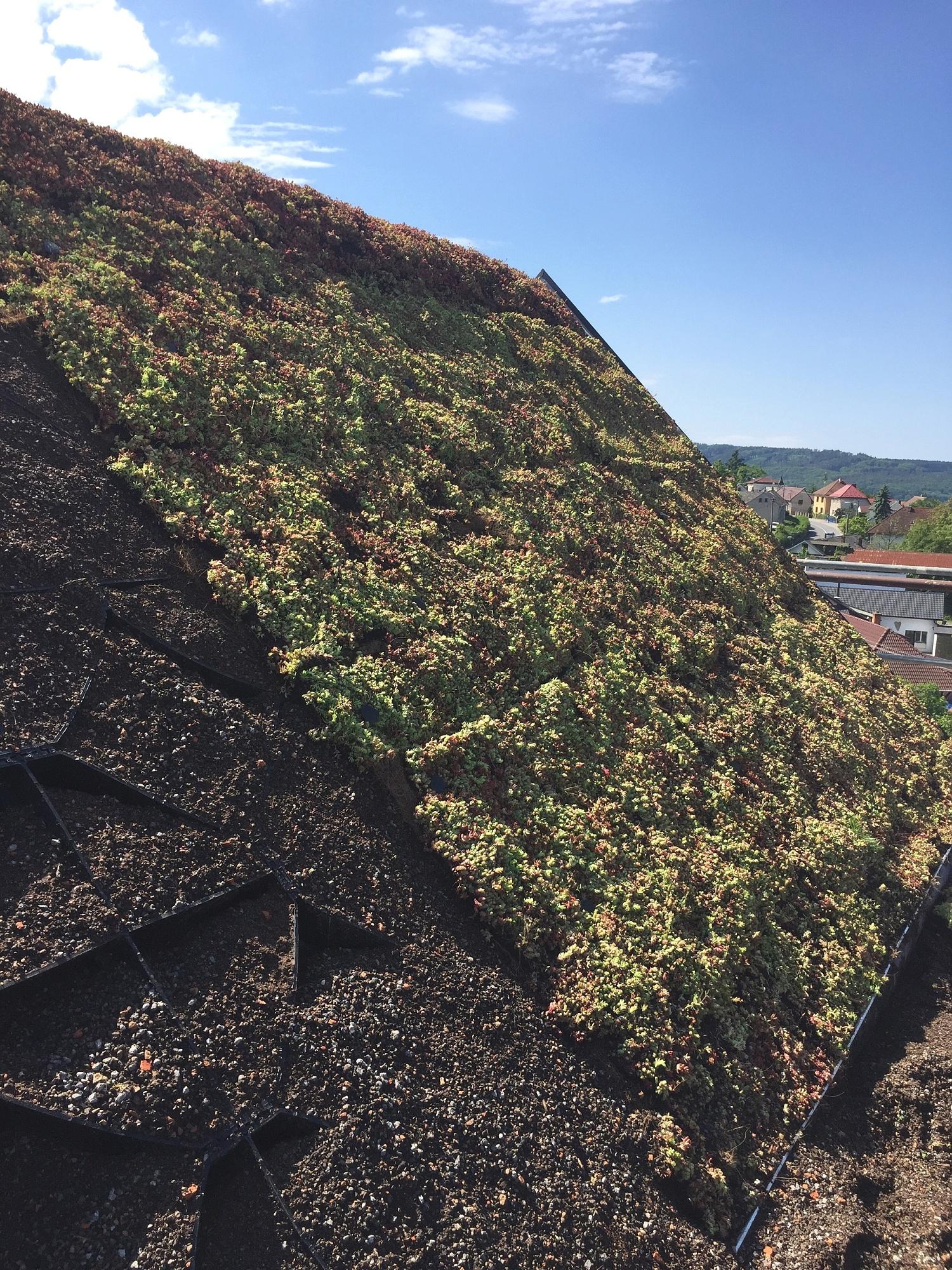 I šikmé střechy mohou být zelené!